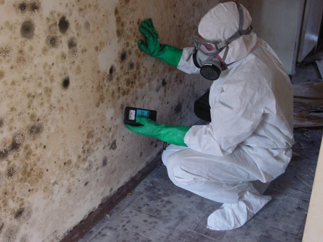 mould remediation experts