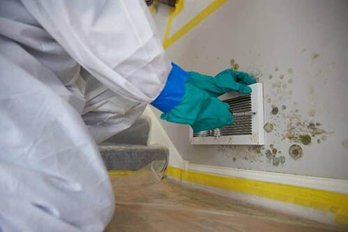 mould inspections australia